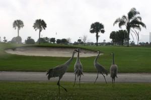 Birds 010