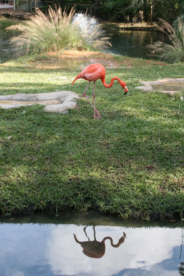 Brevard Zoo Flamingo