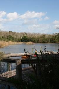 Brevard Zoo Lake