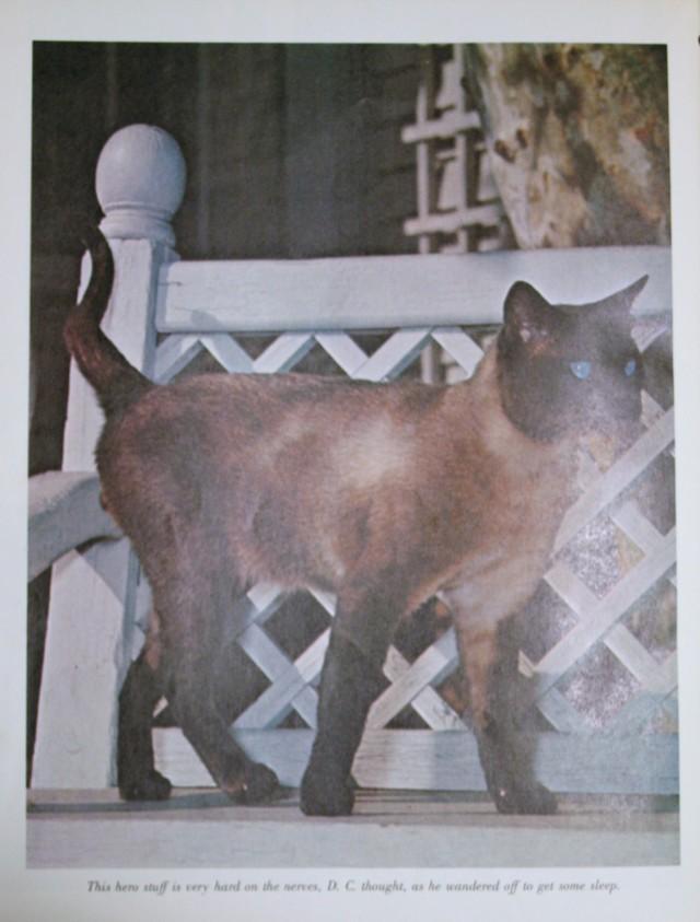 That Darn Cat Cat