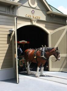 Horse CMs 3