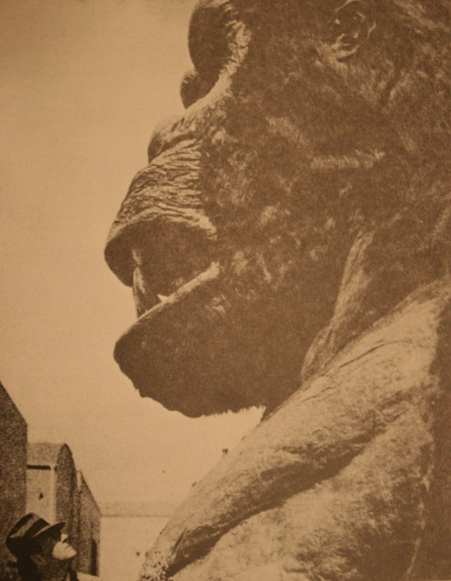King Kong 018